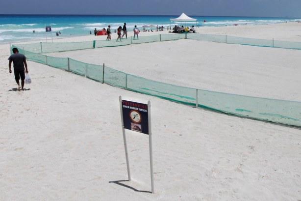 Las costas de Quintana Roo son zonas de desove de la tortuga marina.