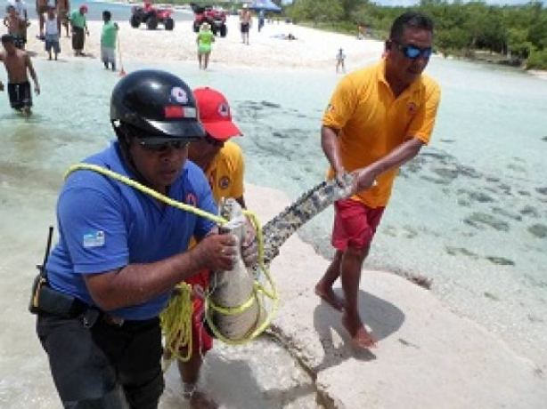 Los reptiles se avistaron a un par de metros de la costa.